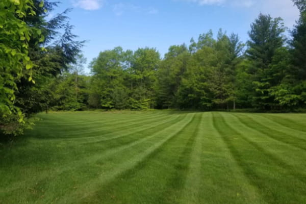 Complete Lawn Care Services